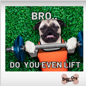 DOG WORKING OUT FUNNY MEME DO [...]