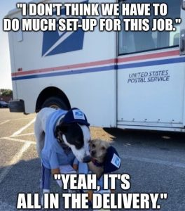 Dog USPS united states postal service mail Halloween Costume Meme - i don't think we have much set-up it's all in the delivery funny