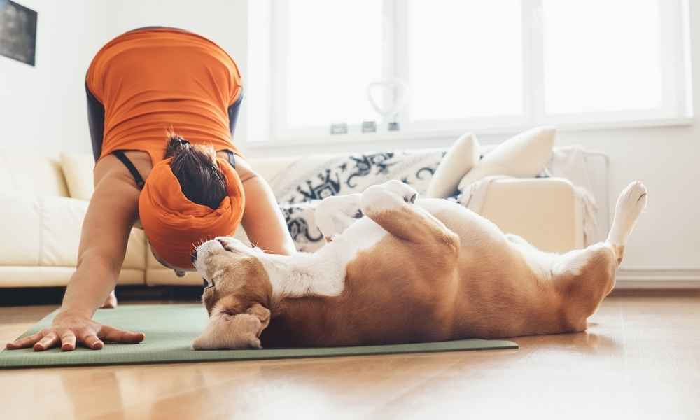 Doga Is The Coolest Thing Since Yoga