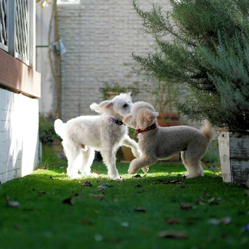 dogs tail wagging while playing