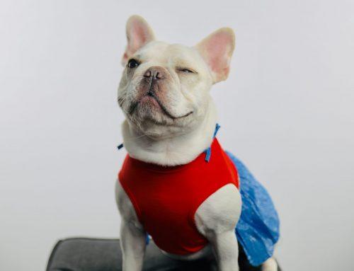 Amazon's 2020 Basic Dog Mom Costume Picks
