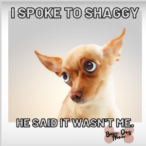 Funny Dog Meme Guilty Pup I Spoke To Shaggy Wasn't Me