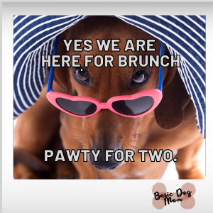 Funny Dog Meme with Sunglasses Hat [...]