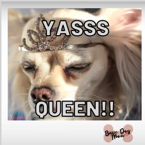 Funny Dog Meme Yas Yes [...]