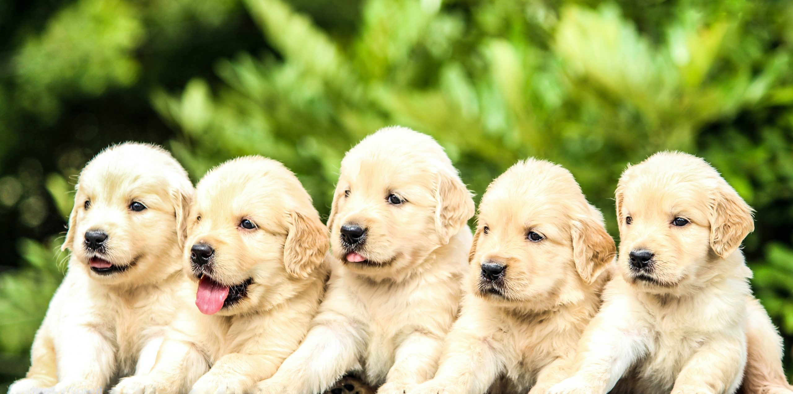 Picture of a group of puppies