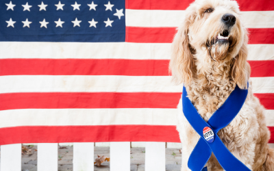 dog sitting in front of flag smiling