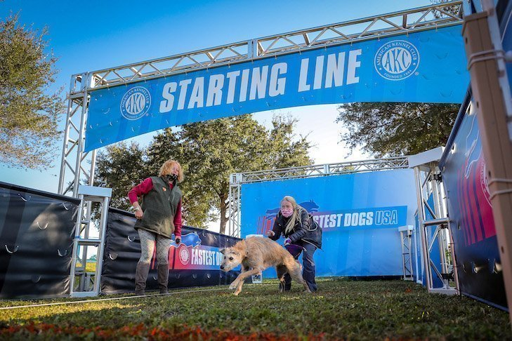 Dog running out quickly from starting line at a race