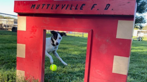 Dog Park Etiquette Tips And Popular Questions, Answered.