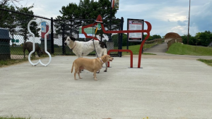 Dogs waiting for their turn to go inside the gate at the dog park.