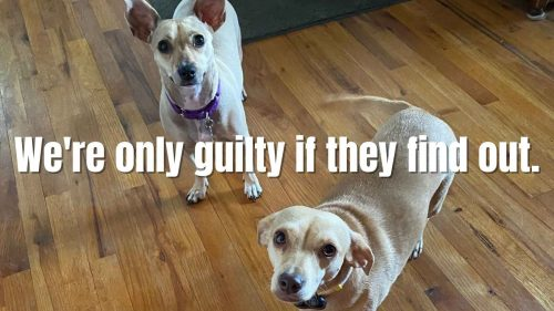 Funny Dog Meme - Were only guilty if they find out.