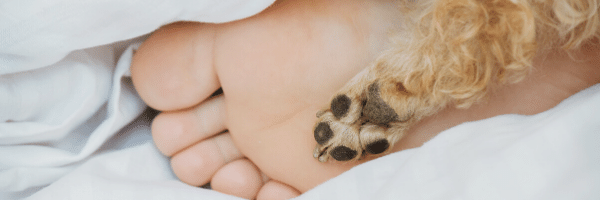 Dog sleeping in the bed with their human