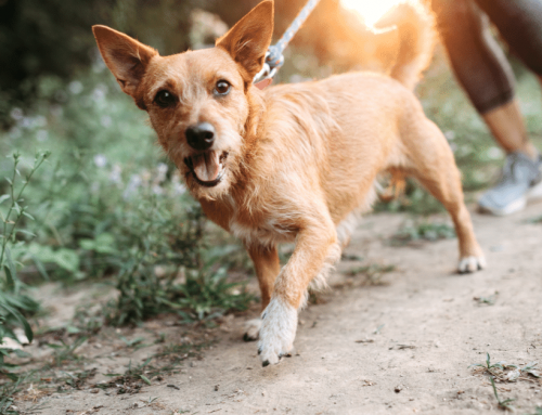 Discover 9 Staggering Benefits Of Running With Your Dog