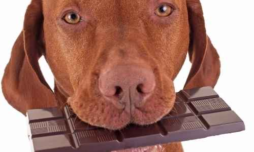 Being aware of the different types of chocolates that could be in food is essential to keeping your dog safe.