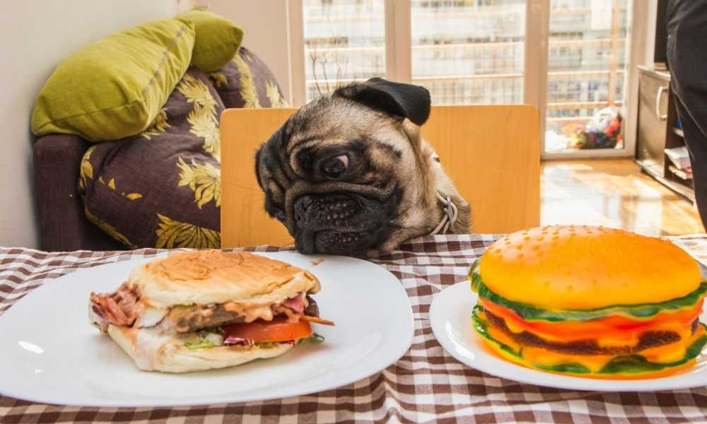 Toxic Foods For Dogs That Are Harmful