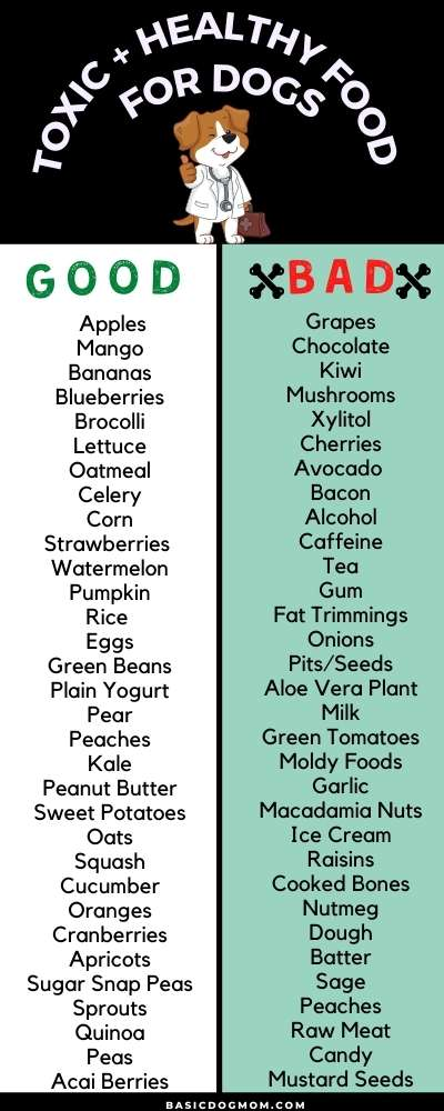 Here is a list of foods that are healthy for your pup and foods you should never give to your dog.