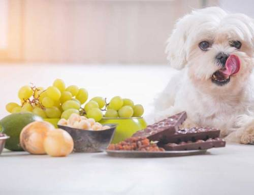 Toxic Foods For Dogs That Are Harmful (Printable!)