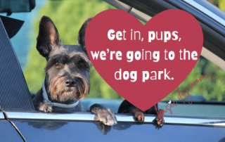 Get in, pups, we're going to the dog park.