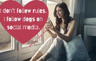I don't follow rules. I follow dogs on social media.