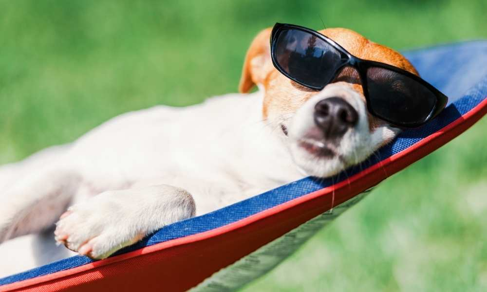 Dog quotes and captions for dog moms and the beach.