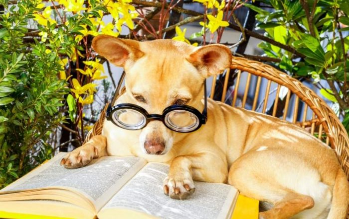 Here are some awesome dog quotes in your favorite books and reading.