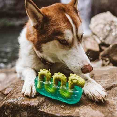 BarkBox Tough Dog Toys & Chews for Aggressive Chewers