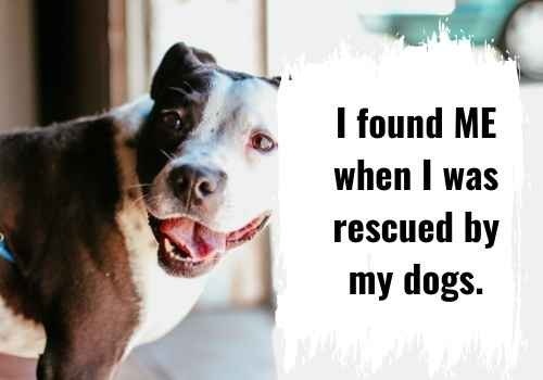 I found me when I was rescued by my dogs.