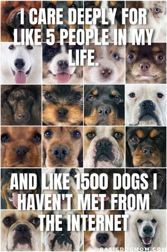 Funny Dog Mom Meme - All I care about are like 5 people and 1500 dogs I met on the internet.