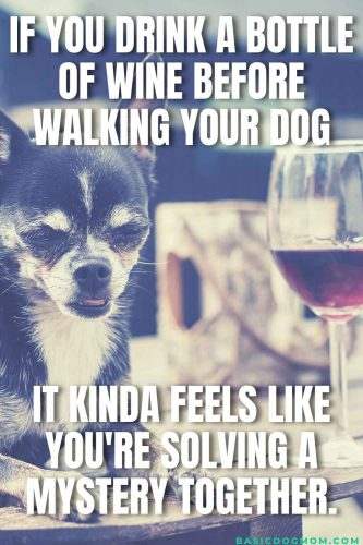 Funny Dog Meme - When you drink a bottle of wine before walking your dog and it kind of feels like you are solving a mystery together.