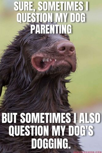 Funny Dog Meme - Sire, sometimes I question my dog parenting. But sometimes I also question my dog's dogging.