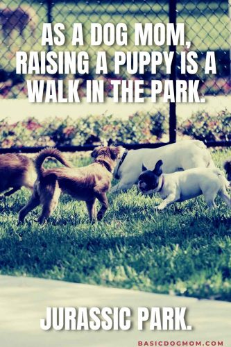 Funny Dog Mom Meme - As a dog mom, raising a puppy is a walk in the park. Jurassic Park.