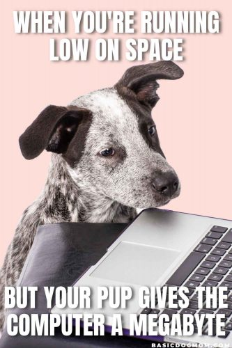 Funny Dog Meme - When you're running low on space but your pup gives the computer a megabyte.