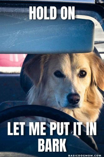 Funny Dog Meme - Hold on, let me put it in bark.
