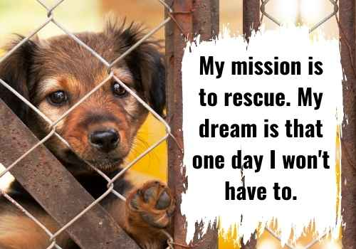 My mission is to rescue. My dream is that one day I won't have to.