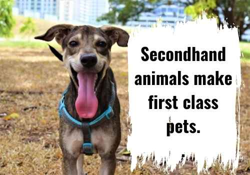Secondhand animals make first class pets.