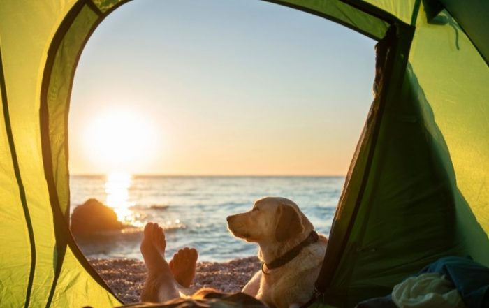Camping with your dogs