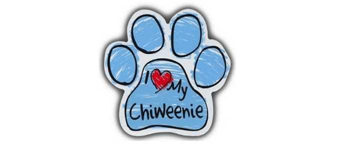I Heart My Chiweenie Dog Sticker