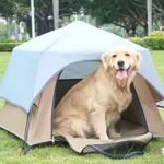 Dog Camping Tent