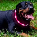 Safety LED Dog Collar