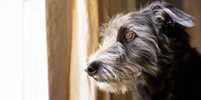 11 Tips For Leaving Your Dog At Home Alone