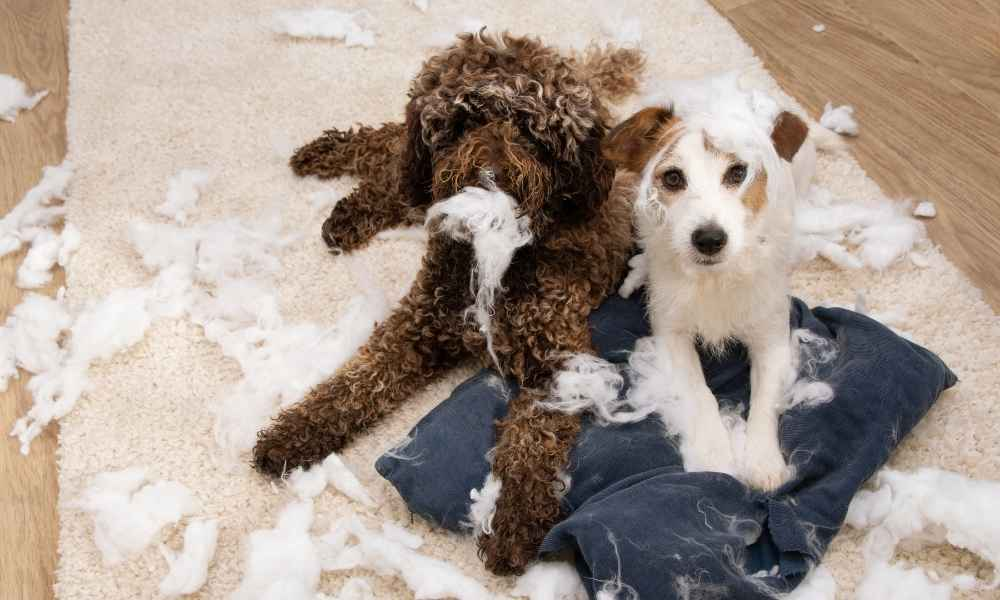 11 Tips For Leaving Your Dog At Home