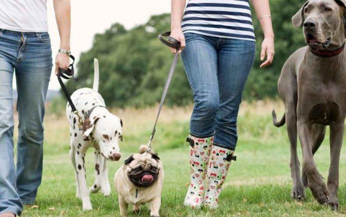 Dog Walking Instagram Captions