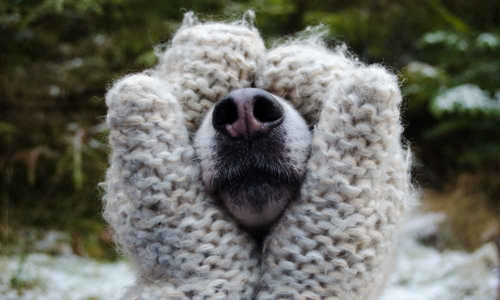 Find out why dogs have wet noses