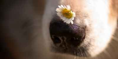Your dog has a wet nose because wet noses smell things better.