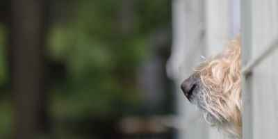 Why does your dog have a cold or wet nose?