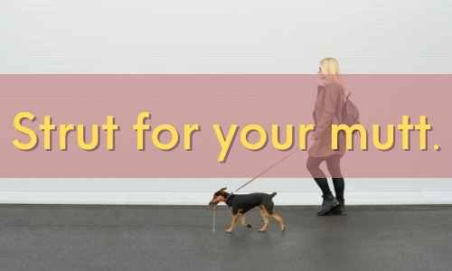 Here are dog walking quotes for your life.