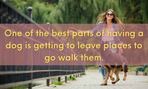 Here are dog walking quotes for your social media