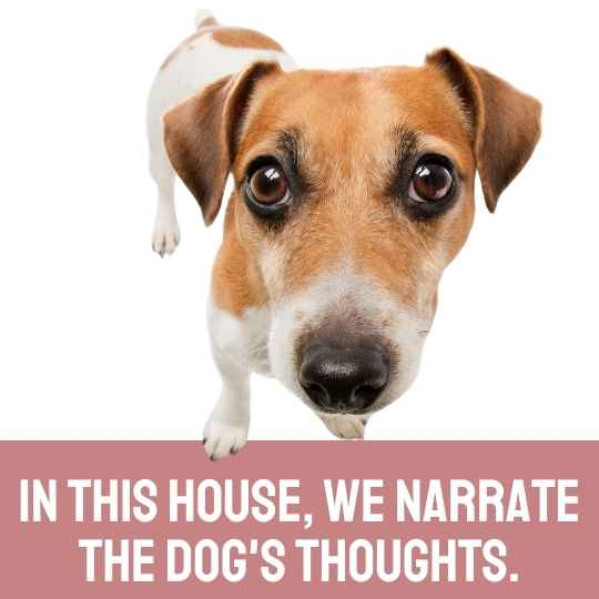 In this house, we narrate the dogs thoughts.