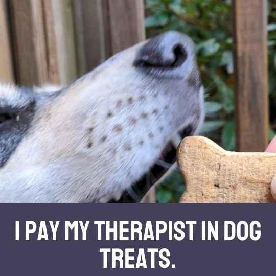 I pay my therapist in dog treats