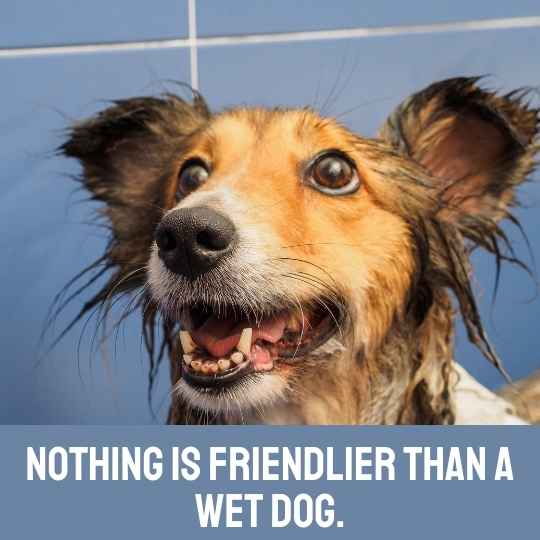 Clever dog Instagram captions - Nothing is friendlier than a wet dog.