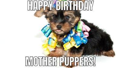 bulldog happy birthday meme